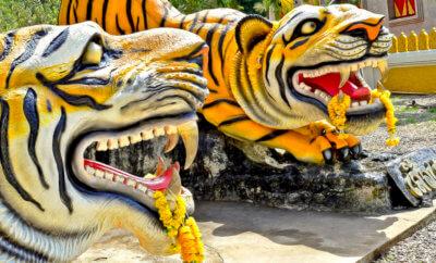 главная храм тигра