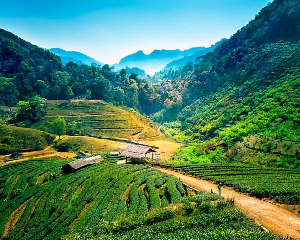 горы Чиангмай