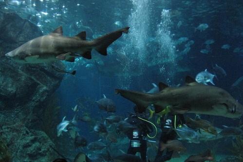 океанариум в Тайланде